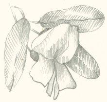 flower-bg